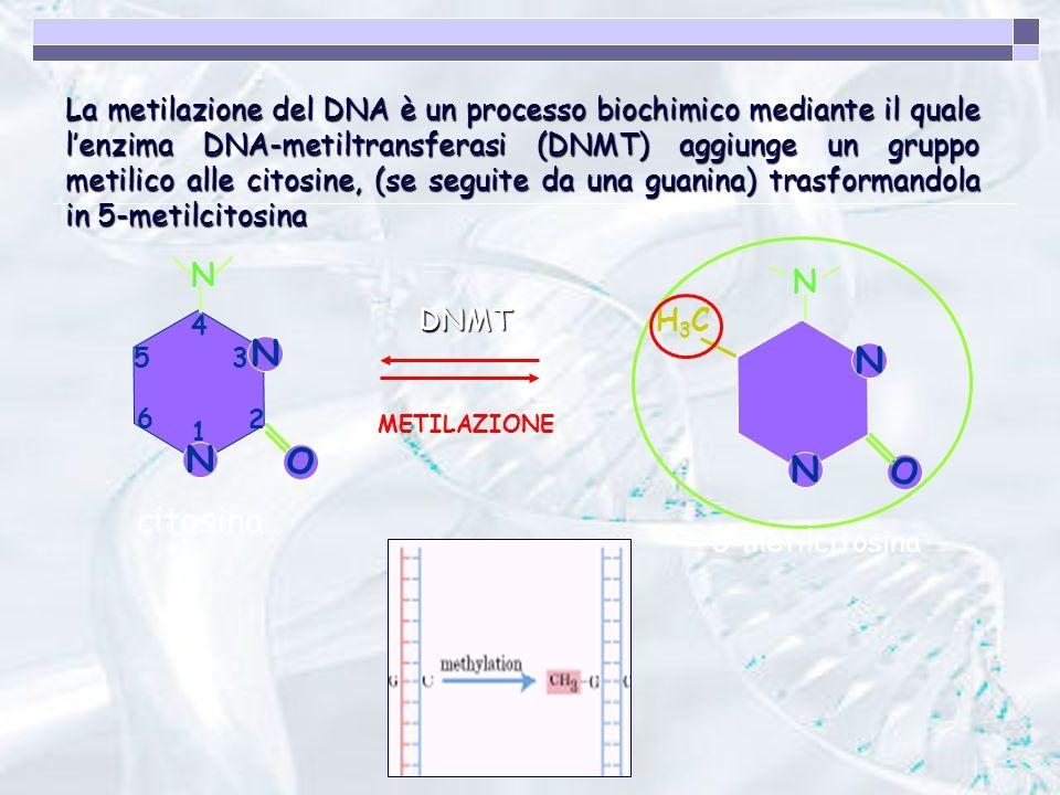 La metilazione del DNA è un processo biochimico mediante il quale l'enzima DNA-metiltransferasi (DNMT) aggiunge un gruppo metilico alle citosine, (se seguite da una guanina) trasformandola in 5-metilcitosina