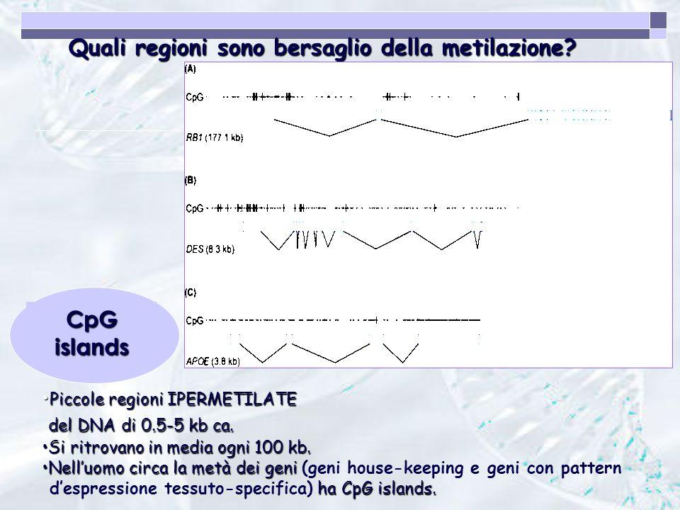 Quali regioni sono bersaglio della metilazione