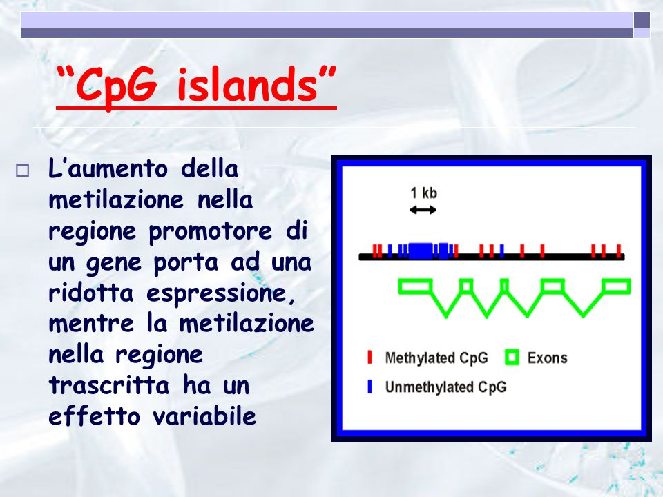 CpG islands