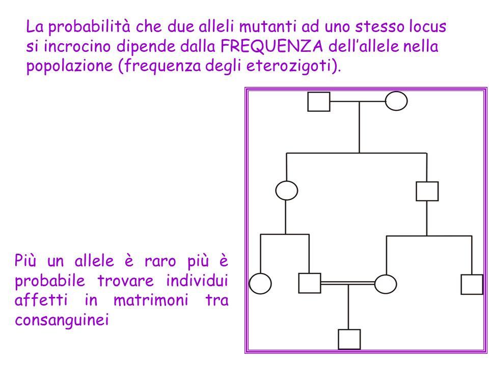 La probabilità che due alleli mutanti ad uno stesso locus si incrocino dipende dalla FREQUENZA dell'allele nella popolazione (frequenza degli eterozigoti).
