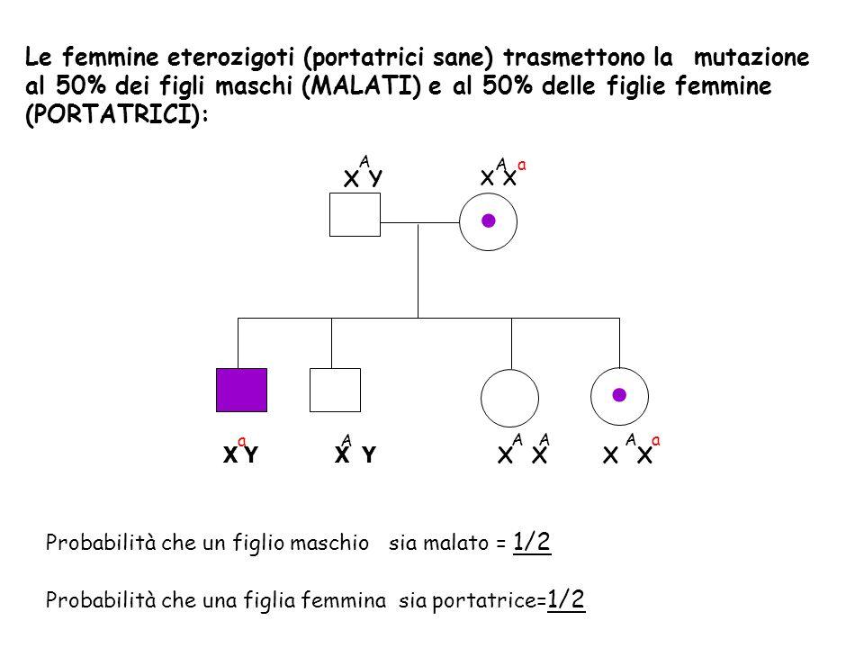 Le femmine eterozigoti (portatrici sane) trasmettono la mutazione al 50% dei figli maschi (MALATI) e al 50% delle figlie femmine (PORTATRICI):