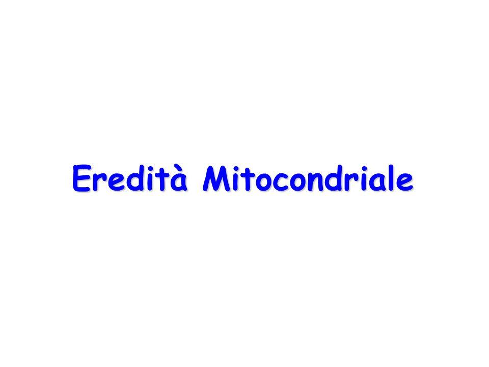 Eredità Mitocondriale