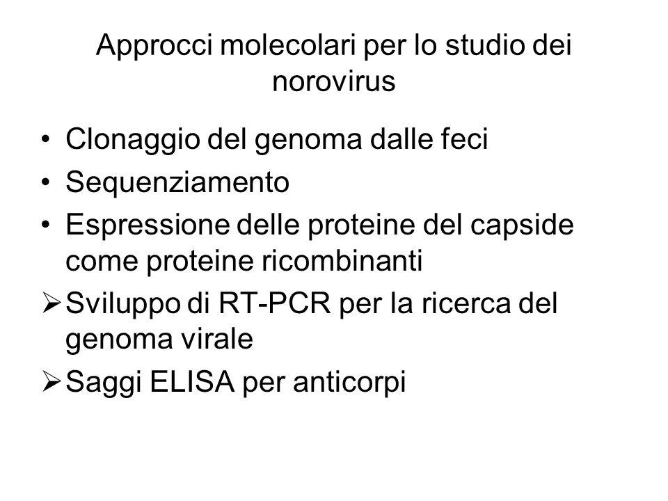 Approcci molecolari per lo studio dei norovirus