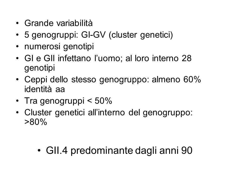 GII.4 predominante dagli anni 90
