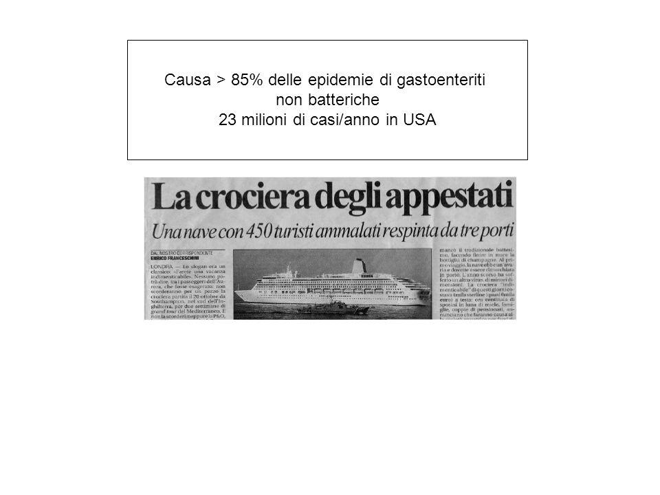 Causa > 85% delle epidemie di gastoenteriti non batteriche