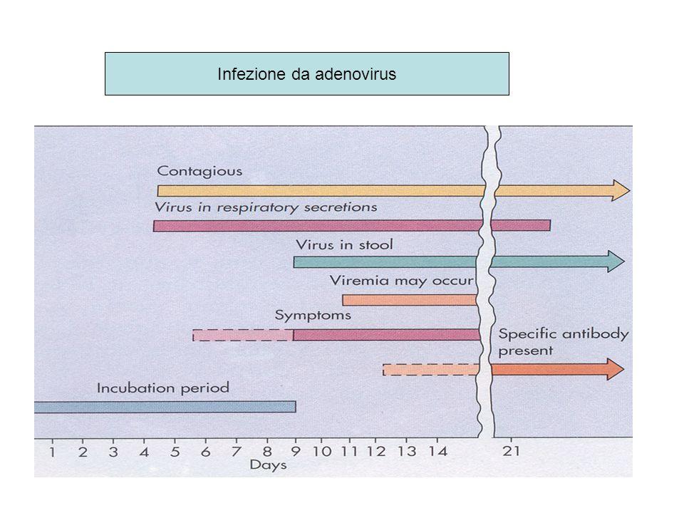 Infezione da adenovirus