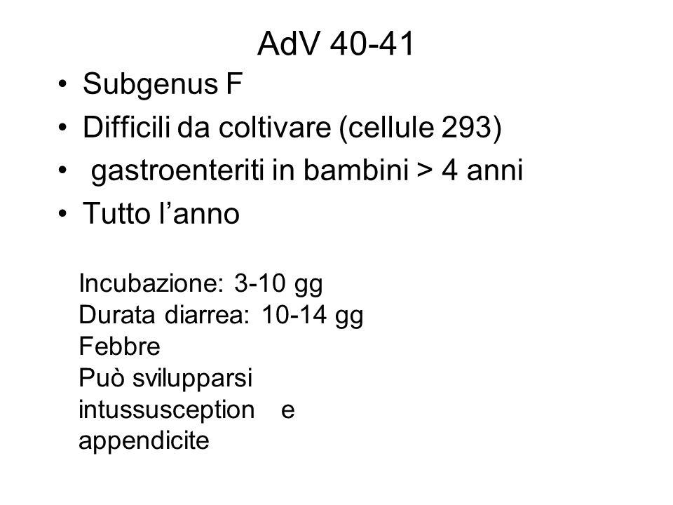AdV 40-41 Subgenus F Difficili da coltivare (cellule 293)