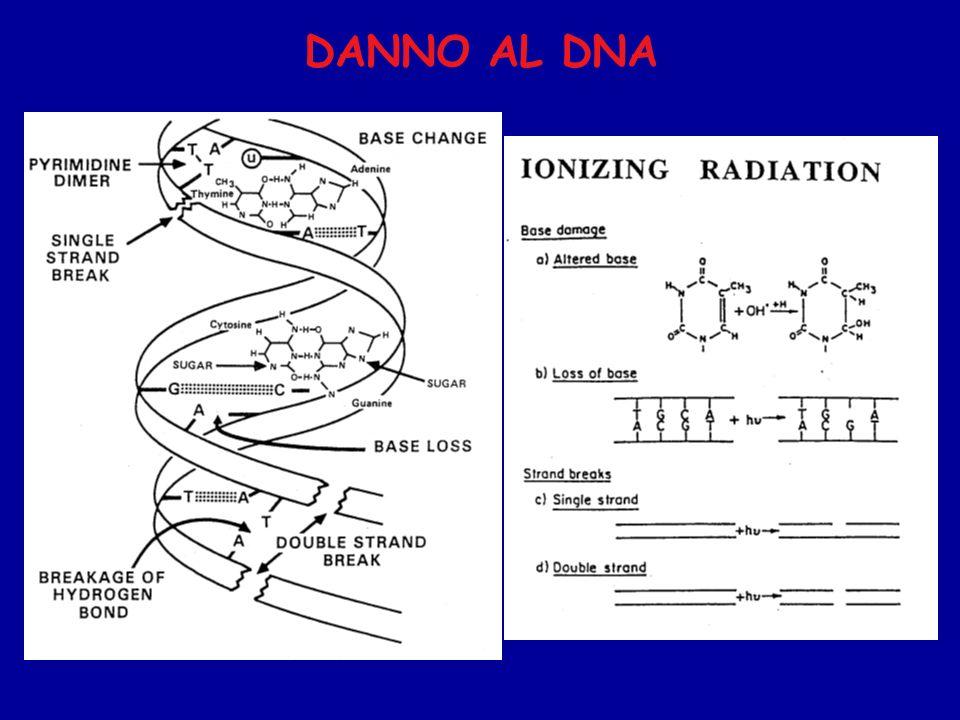 DANNO AL DNA 6
