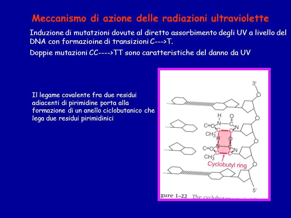 Meccanismo di azione delle radiazioni ultraviolette