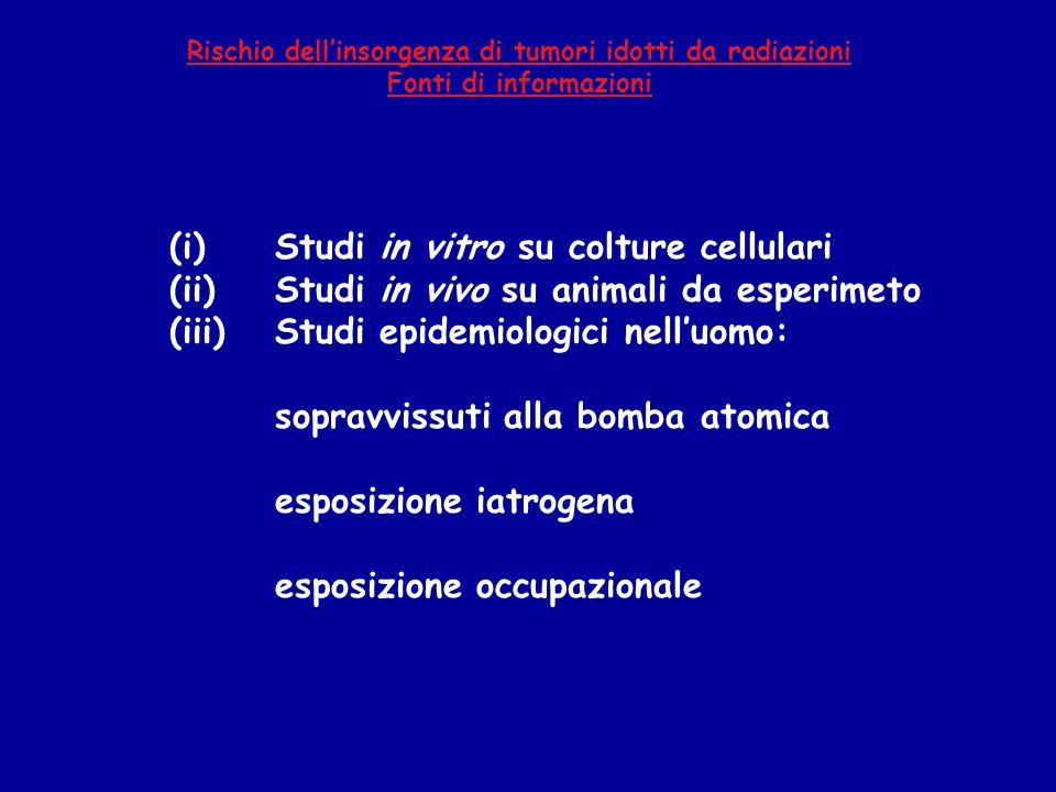 (i) Studi in vitro su colture cellulari