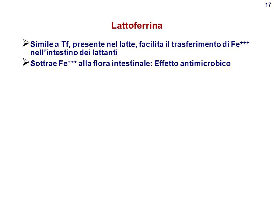 Lattoferrina Simile a Tf, presente nel latte, facilita il trasferimento di Fe+++ nell'intestino dei lattanti.