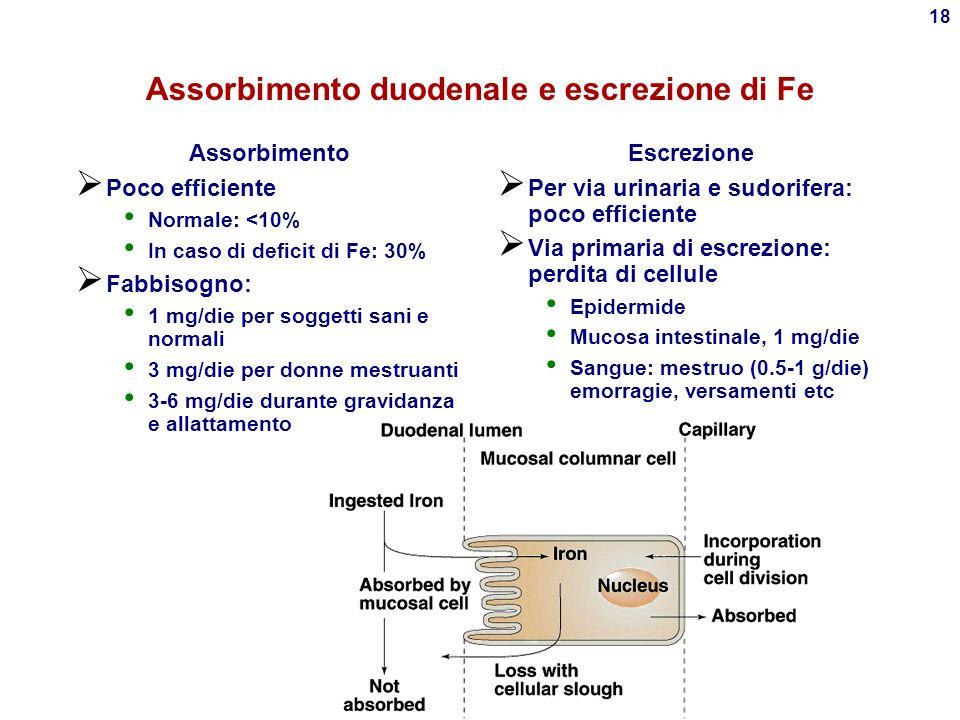 Assorbimento duodenale e escrezione di Fe