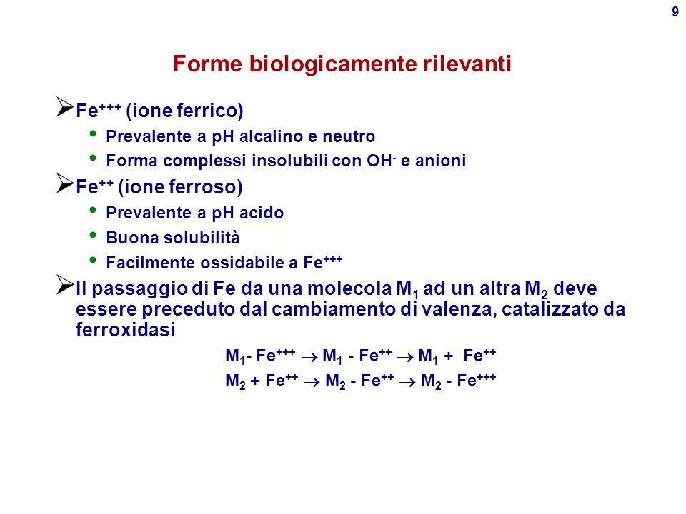 Forme biologicamente rilevanti