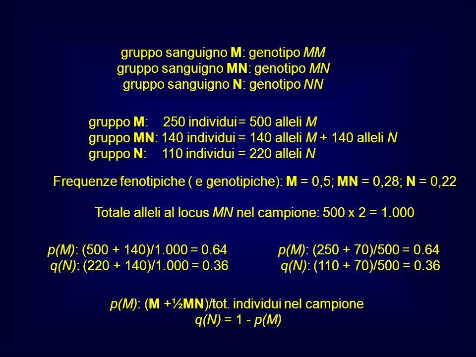 gruppo sanguigno M: genotipo MM gruppo sanguigno MN: genotipo MN