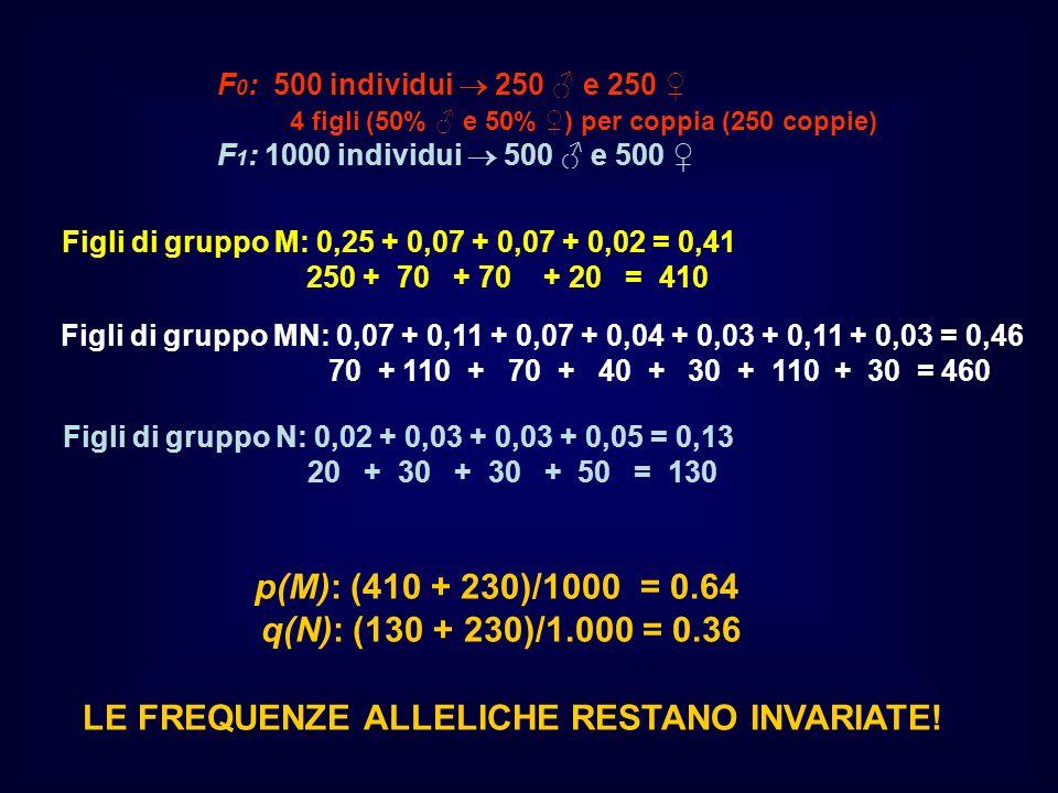p(M): (410 + 230)/1000 = 0.64 q(N): (130 + 230)/1.000 = 0.36
