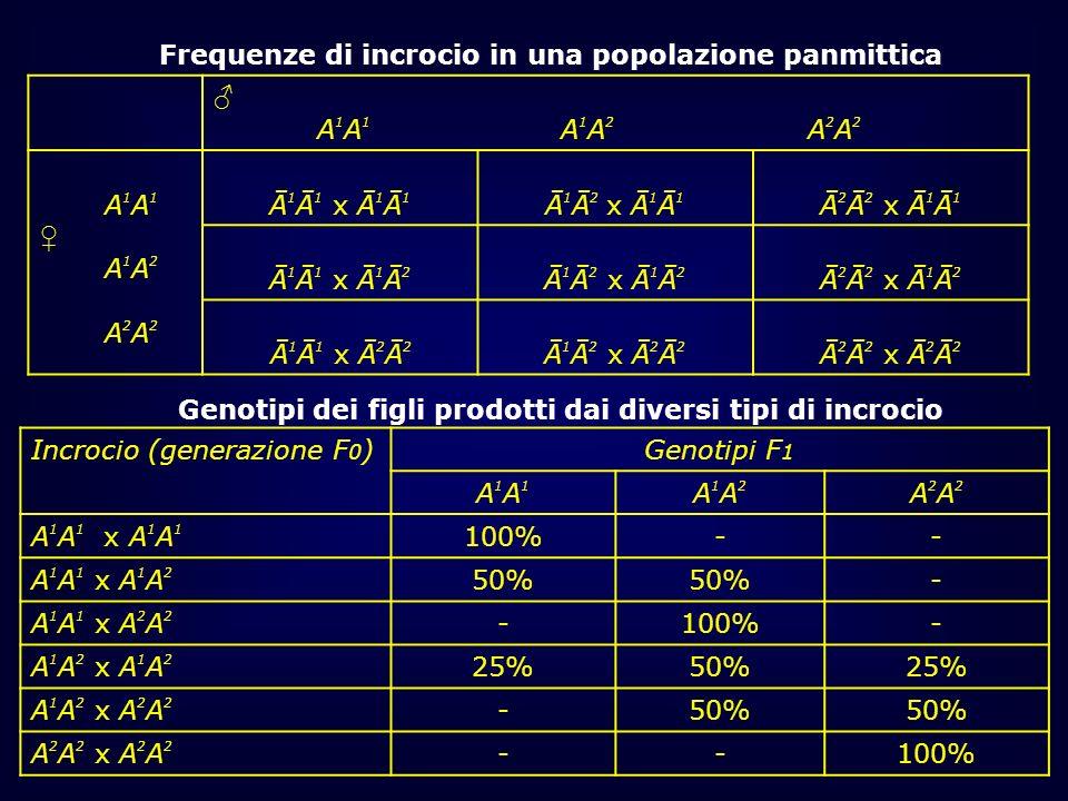 Frequenze di incrocio in una popolazione panmittica