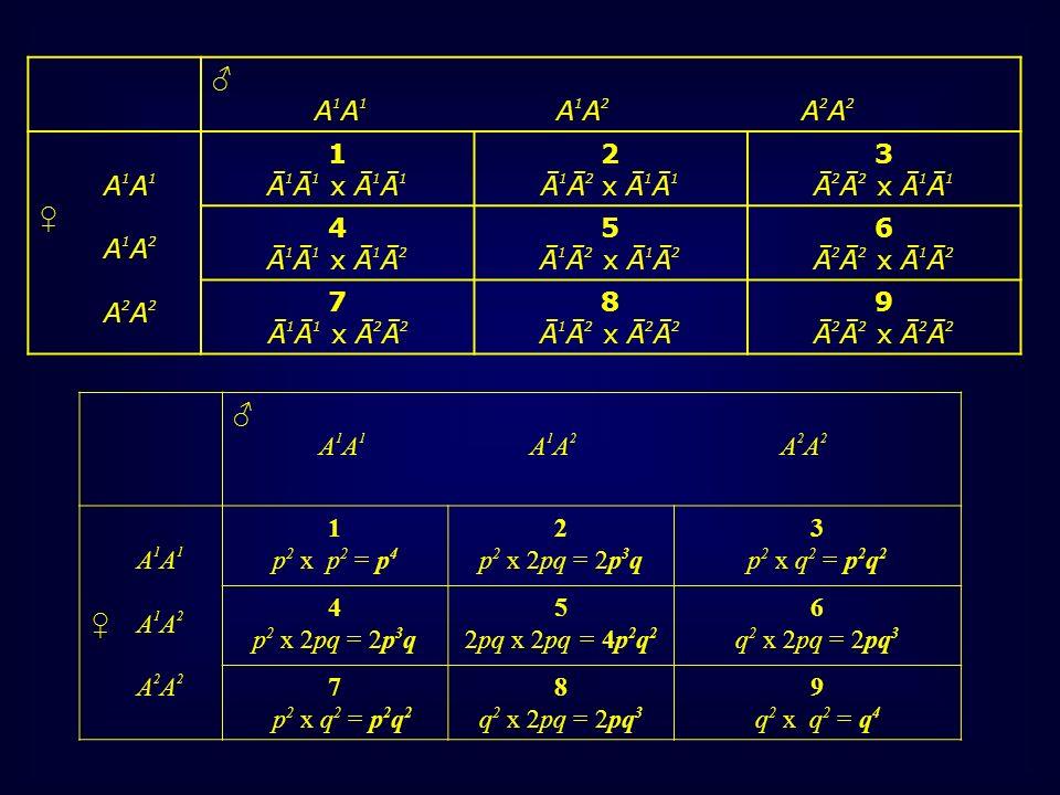 ♂ A1A1 A1A2 A2A2. A1A1. ♀ A1A2. A2A2. 1. Ā1Ā1 x Ā1Ā1. 2.