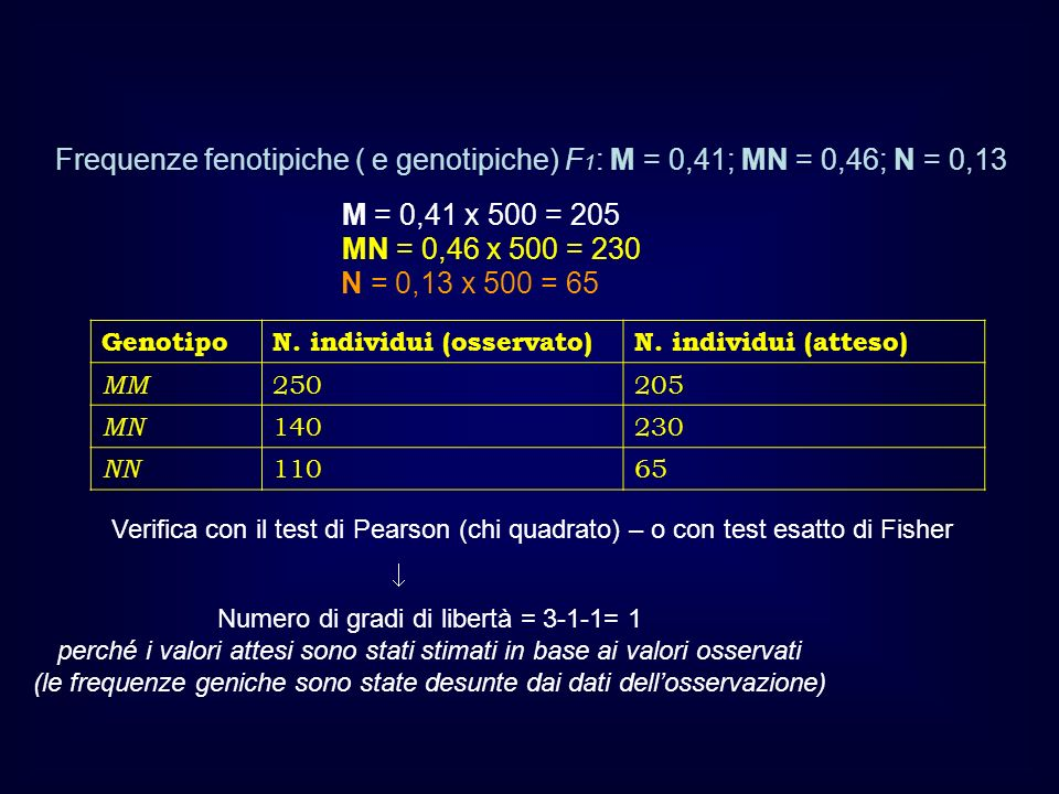 Frequenze fenotipiche ( e genotipiche) F1: M = 0,41; MN = 0,46; N = 0,13
