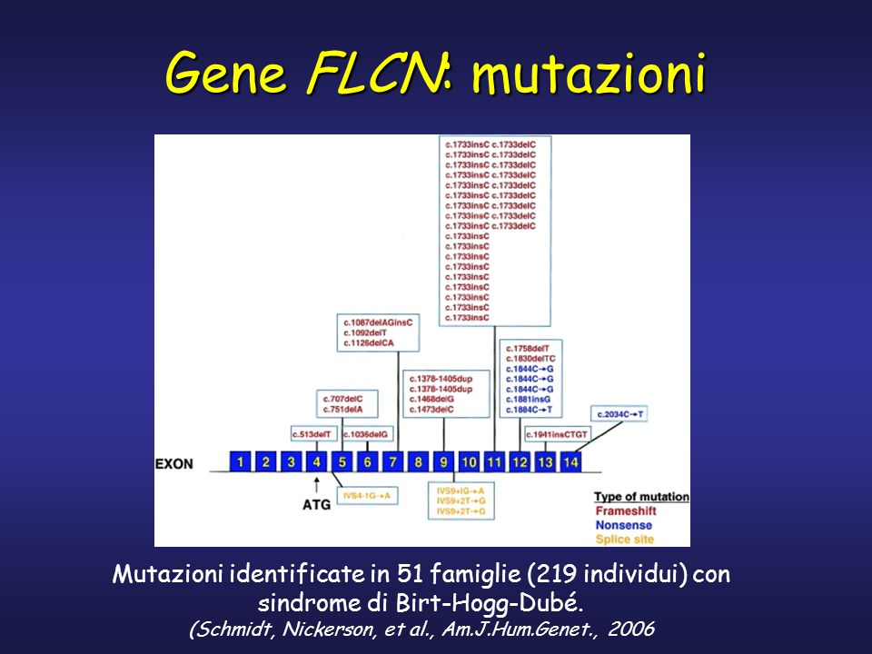 Gene FLCN: mutazioni predicted to prematurely truncate the BHD protein. Mutazioni identificate in 51 famiglie (219 individui) con.