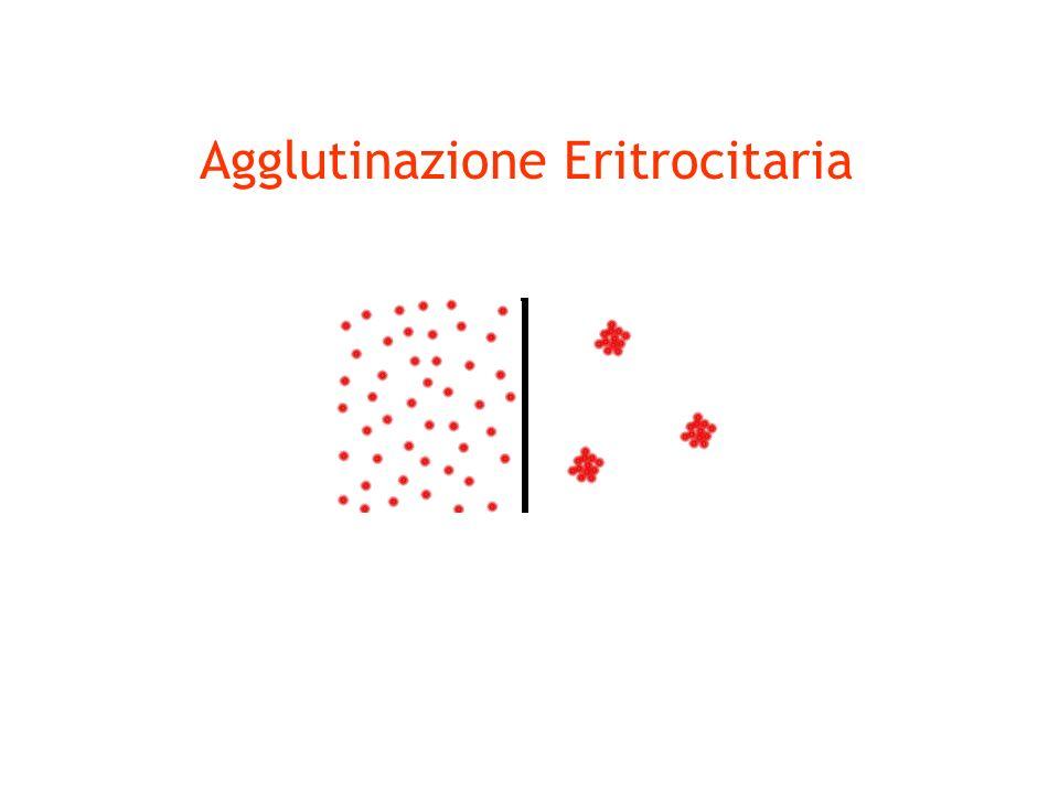 Agglutinazione Eritrocitaria
