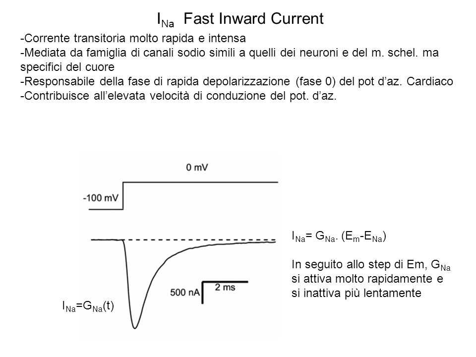 INa Fast Inward Current
