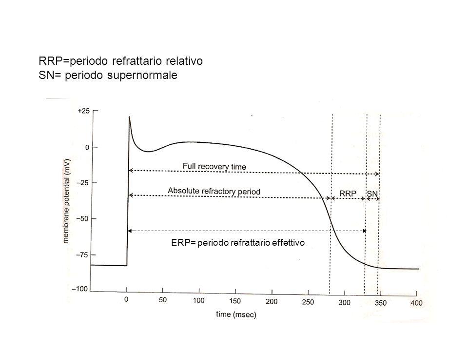 RRP=periodo refrattario relativo SN= periodo supernormale