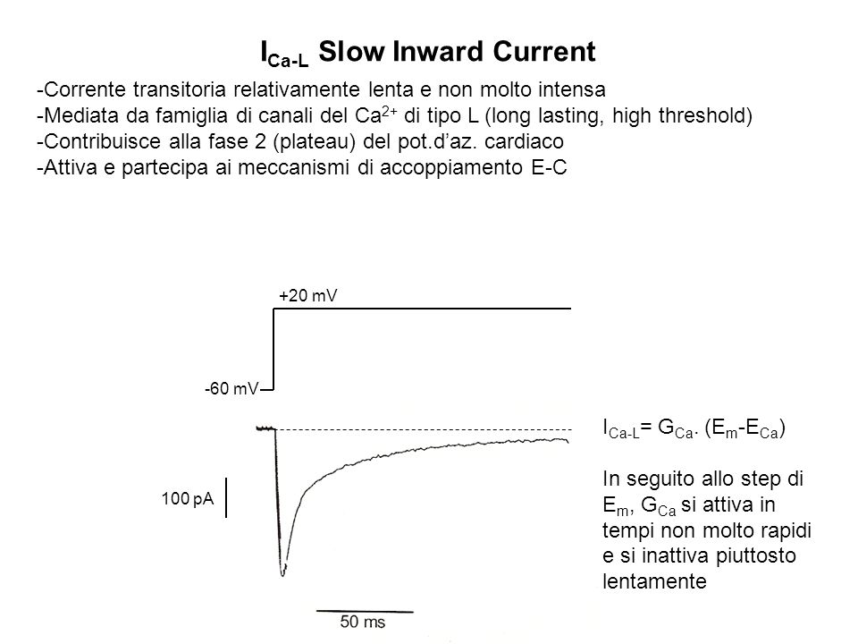 ICa-L Slow Inward Current
