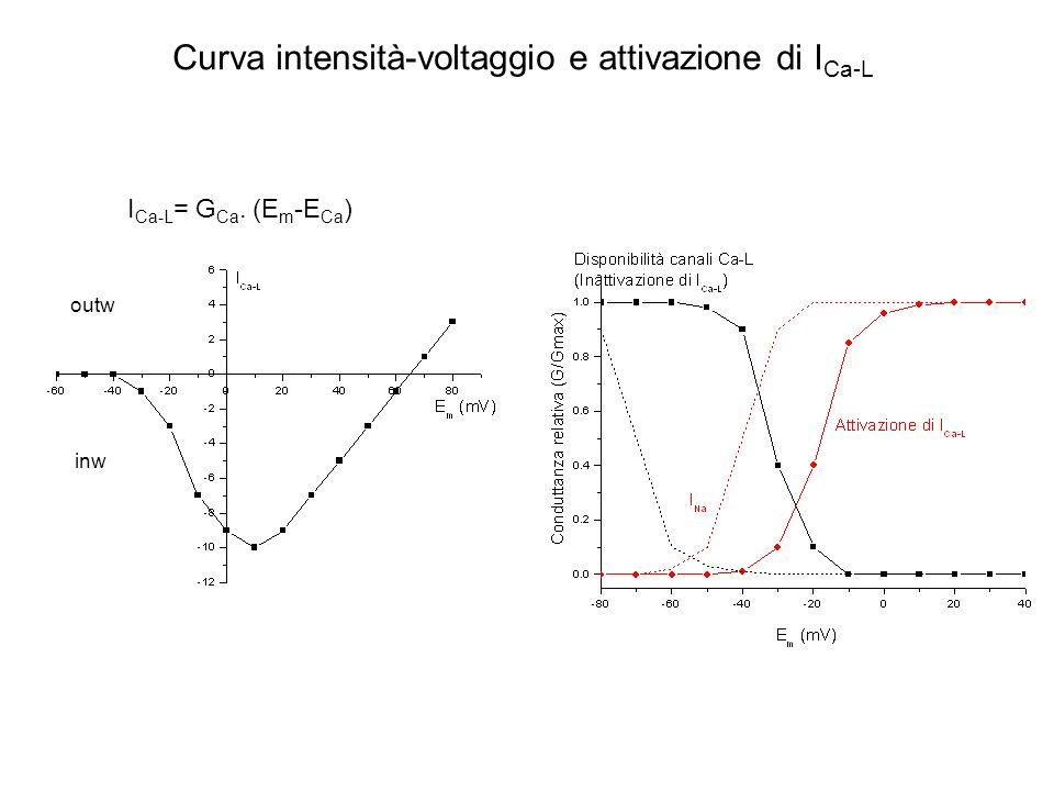 Curva intensità-voltaggio e attivazione di ICa-L