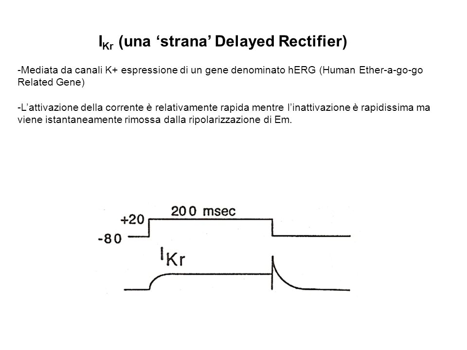 IKr (una 'strana' Delayed Rectifier)