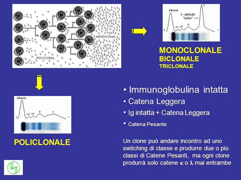 Immunoglobulina intatta