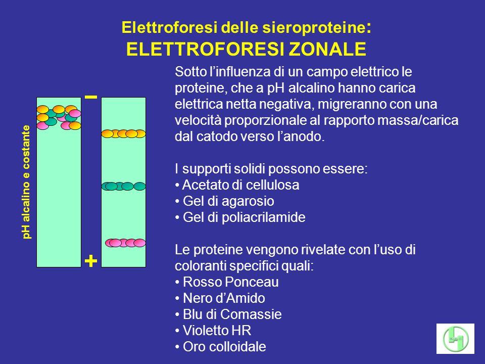 Elettroforesi delle sieroproteine: