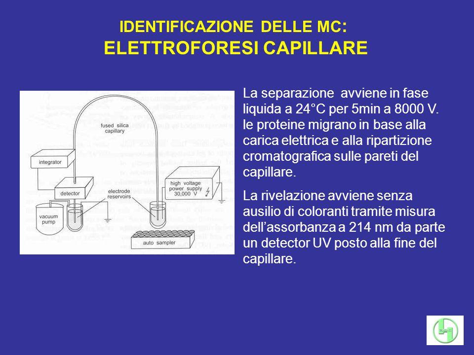 IDENTIFICAZIONE DELLE MC: ELETTROFORESI CAPILLARE