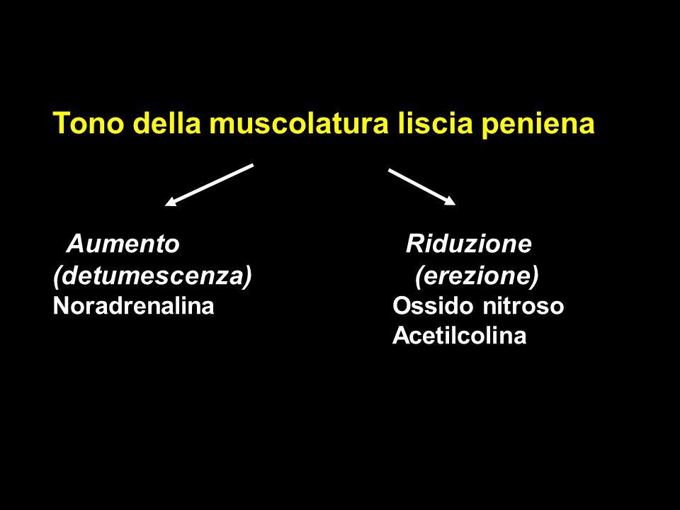 Tono della muscolatura liscia peniena