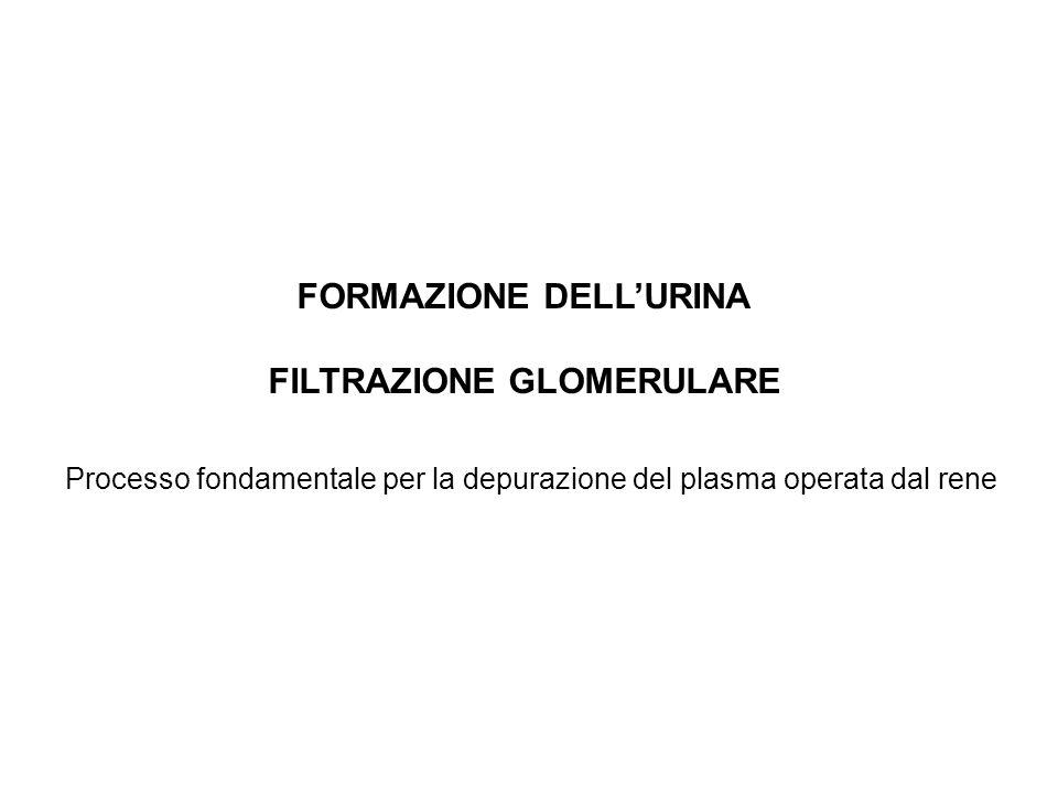 FORMAZIONE DELL'URINA FILTRAZIONE GLOMERULARE