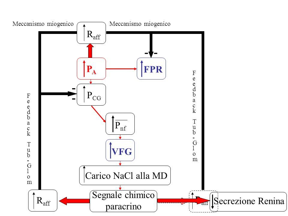 - - - Raff PA FPR PCG Pnf VFG Carico NaCl alla MD Segnale chimico Raff