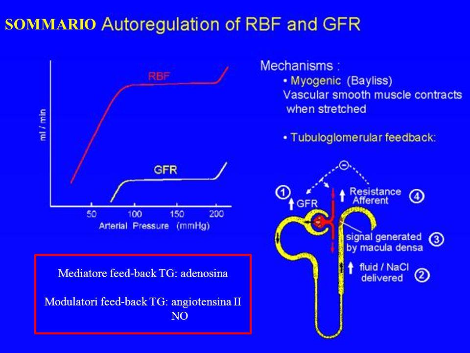 SOMMARIO Mediatore feed-back TG: adenosina