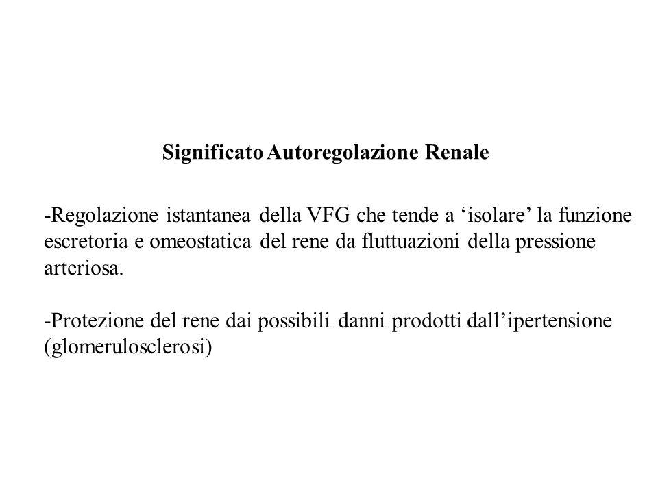 Significato Autoregolazione Renale