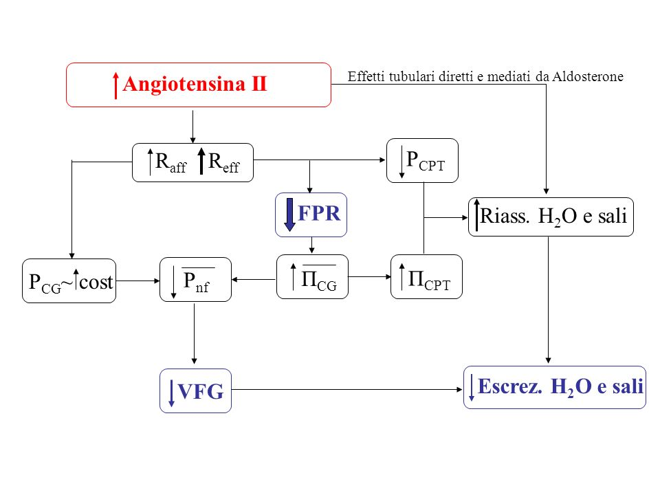 Angiotensina II Raff Reff PCPT FPR Riass. H2O e sali ΠCG ΠCPT