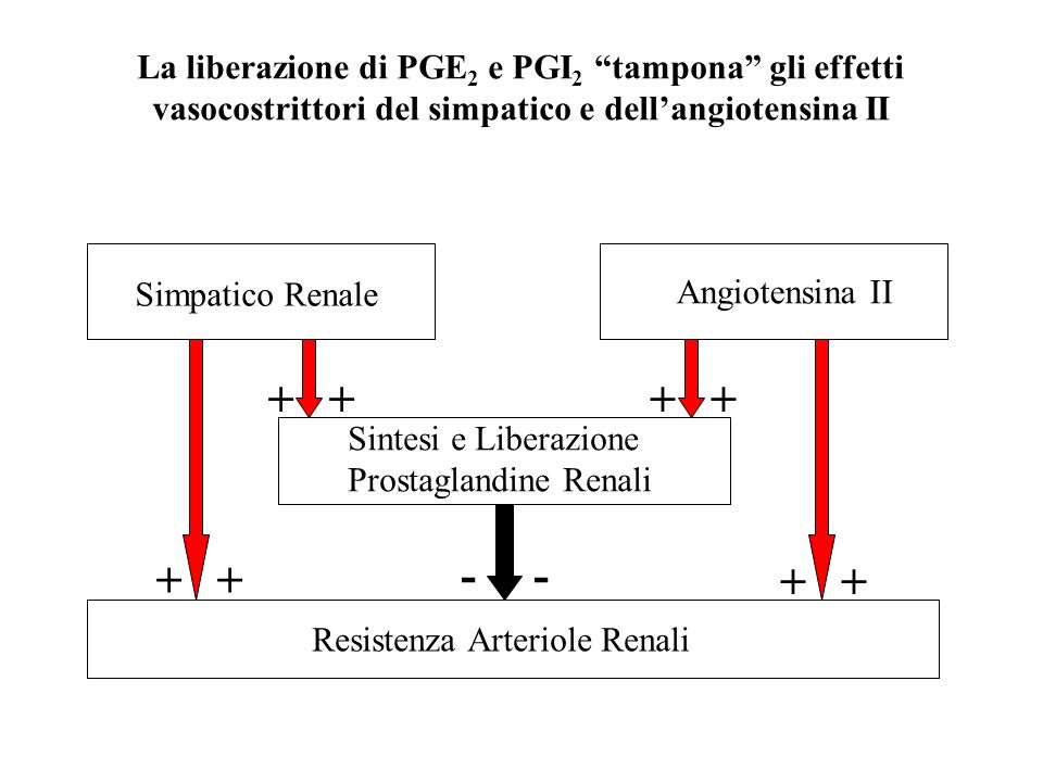 La liberazione di PGE2 e PGI2 tampona gli effetti vasocostrittori del simpatico e dell'angiotensina II
