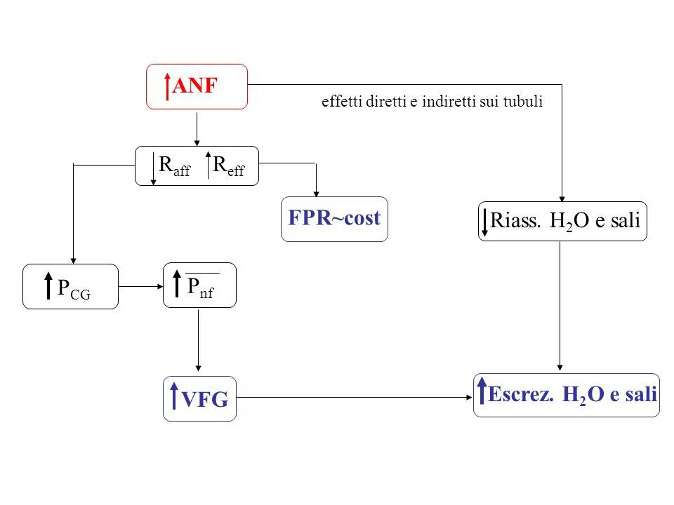 ANF Raff Reff FPR~cost Riass. H2O e sali PCG Pnf Escrez. H2O e sali