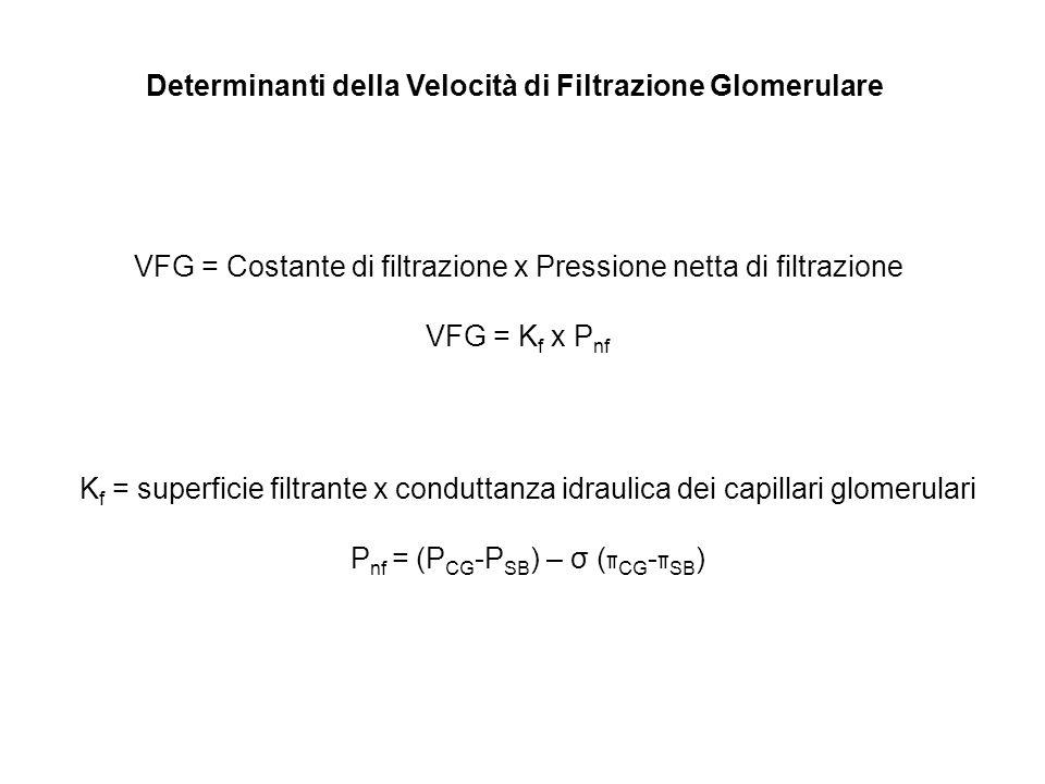 Determinanti della Velocità di Filtrazione Glomerulare