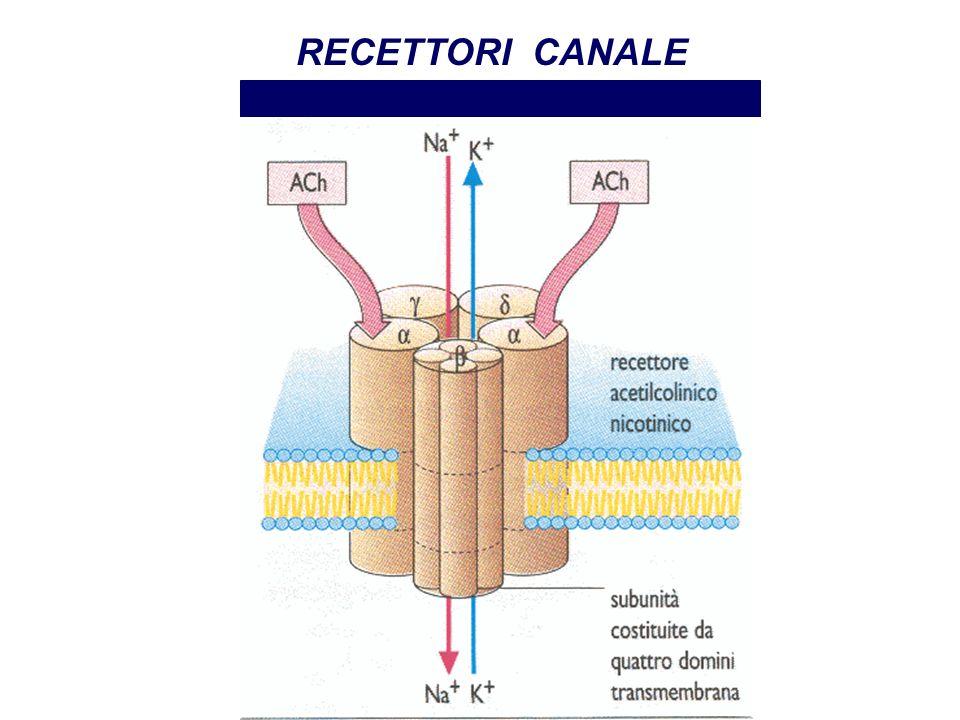 RECETTORI CANALE Recettore nicotinico Farmacologia per immagini