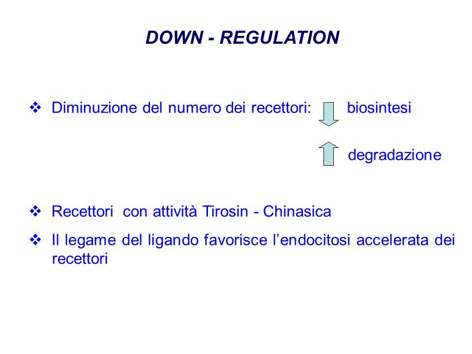 DOWN - REGULATION Diminuzione del numero dei recettori: biosintesi