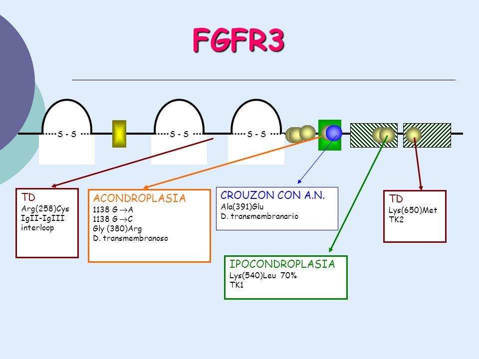 FGFR3 CROUZON CON A.N. TD ACONDROPLASIA TD IPOCONDROPLASIA S - S