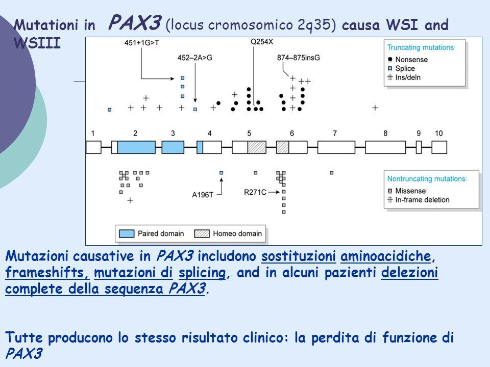 Mutationi in PAX3 (locus cromosomico 2q35) causa WSI and WSIII