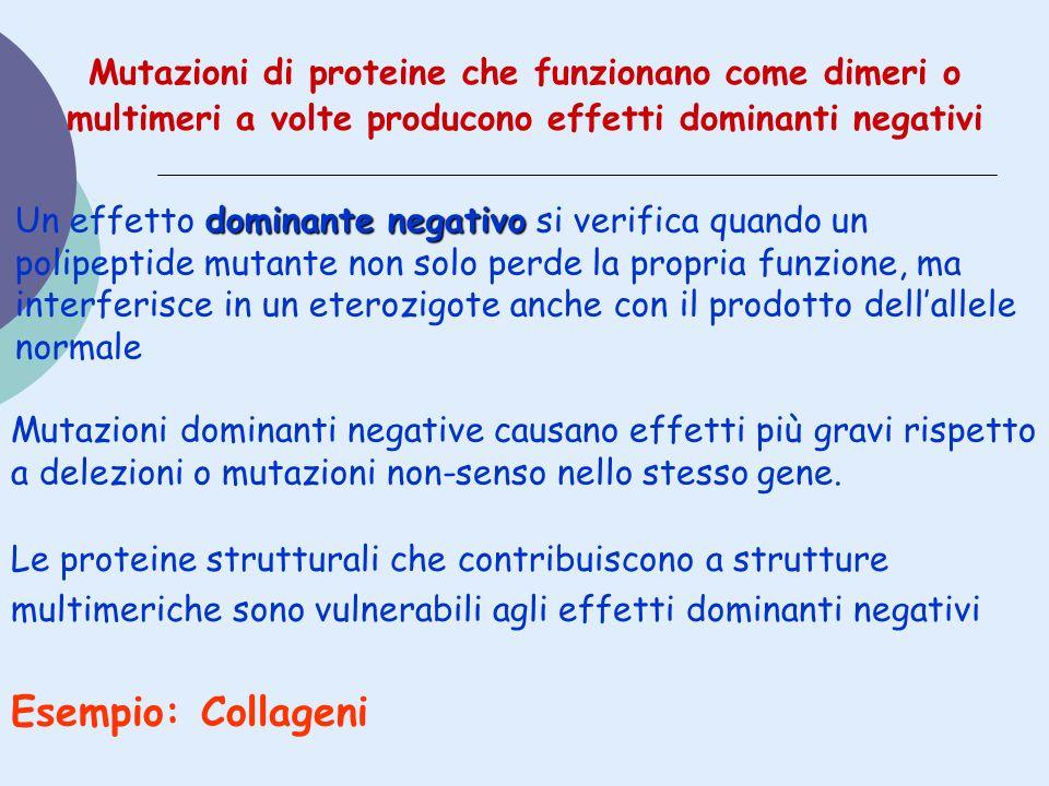Mutazioni di proteine che funzionano come dimeri o multimeri a volte producono effetti dominanti negativi