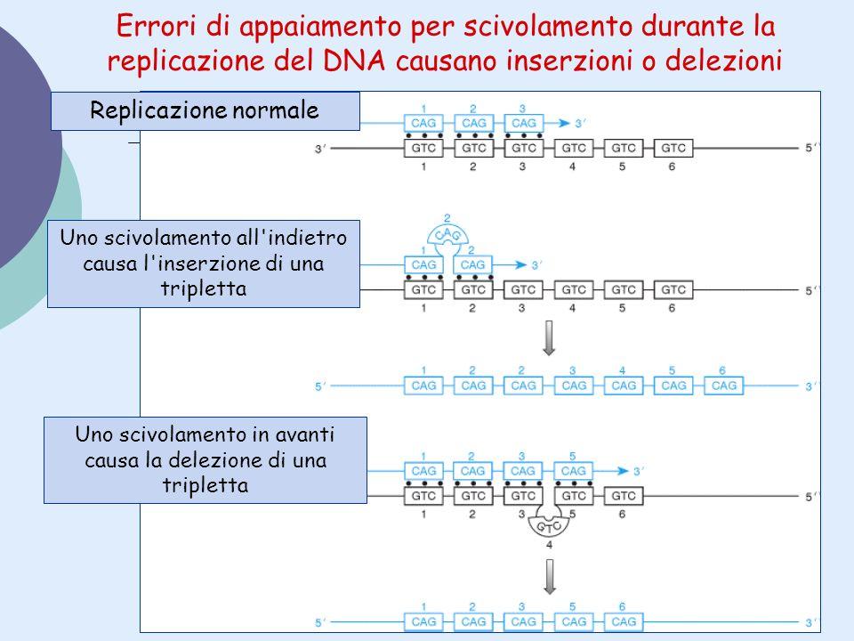 Errori di appaiamento per scivolamento durante la replicazione del DNA causano inserzioni o delezioni