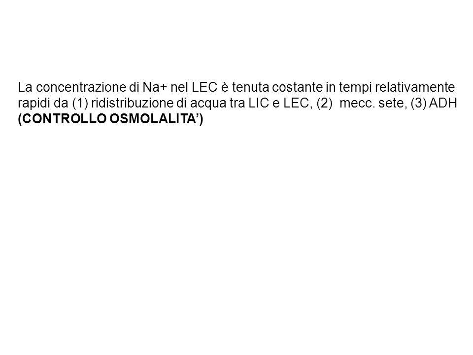 La concentrazione di Na+ nel LEC è tenuta costante in tempi relativamente rapidi da (1) ridistribuzione di acqua tra LIC e LEC, (2) mecc.