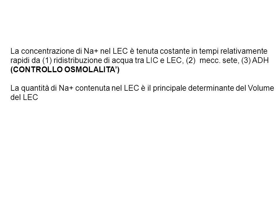 La concentrazione di Na+ nel LEC è tenuta costante in tempi relativamente rapidi da (1) ridistribuzione di acqua tra LIC e LEC, (2) mecc. sete, (3) ADH (CONTROLLO OSMOLALITA')