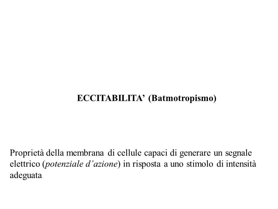 ECCITABILITA' (Batmotropismo)